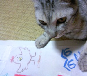 コッコちゃんとミミズand猫