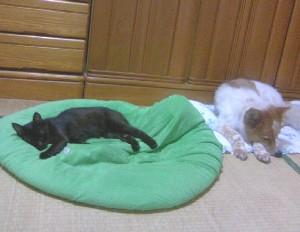 ぴぐモンとニャンギラス寝てます